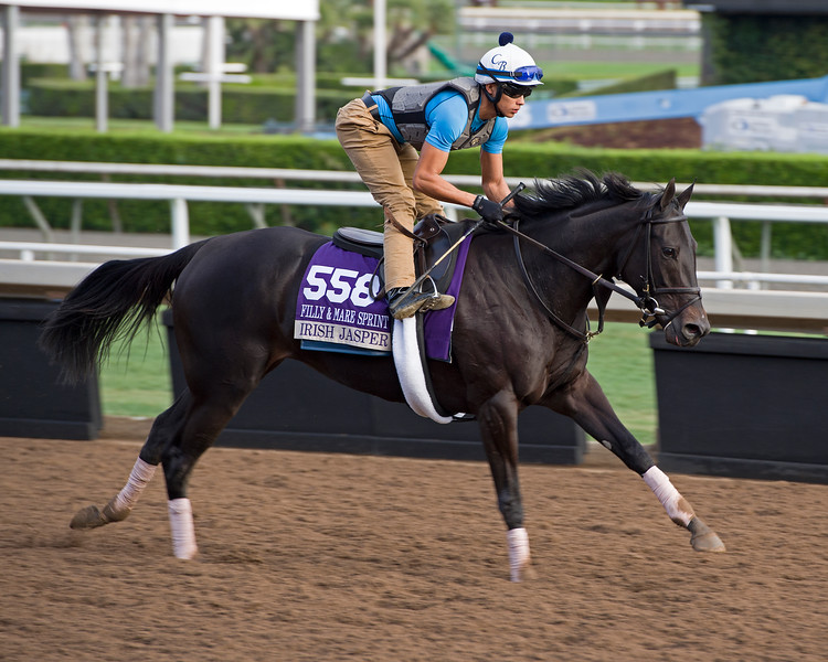 Irish Jasper<br /> Works at Santa Anita in preparation for 2016 Breeders' Cup on Nov. 1, 2016, in Arcadia, CA.