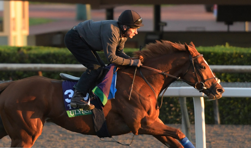 Ulysses out for a gallop at Santa Anita Nov. 3, 2016 in preparation for her appearance in the Breeders' Cup in Arcadia, California.  Photo by Skip Dickstein