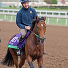Mondialiste with Feargal Davis<br /> Works at Santa Anita in preparation for 2016 Breeders' Cup on Nov. 1, 2016, in Arcadia, CA.