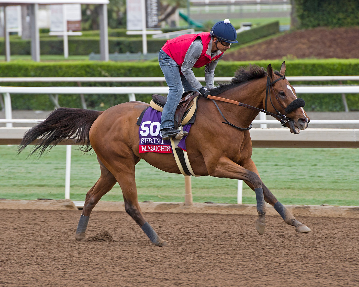 Masochistic with Mike Smith, Sprint.<br /> Works at Santa Anita in preparation for 2016 Breeders' Cup on Oct. 29 2016, in Arcadia, CA.
