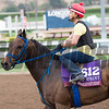 Mongolian Saturday<br /> Works at Santa Anita in preparation for 2016 Breeders' Cup on Oct. 30, 2016, in Arcadia, CA.