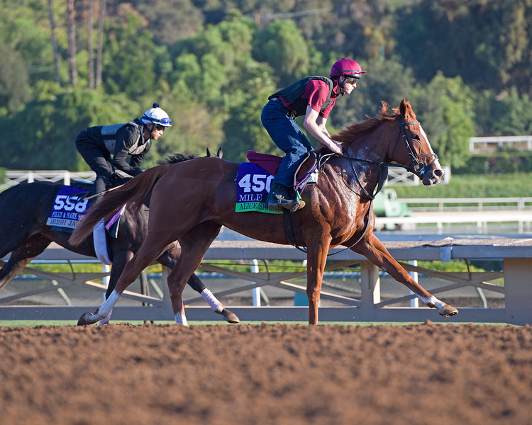 Alice Springs<br /> Morning scenes at Santa Anita in preparation for 2016 Breeders' Cup on Nov. 3, 2016, in Arcadia, CA.