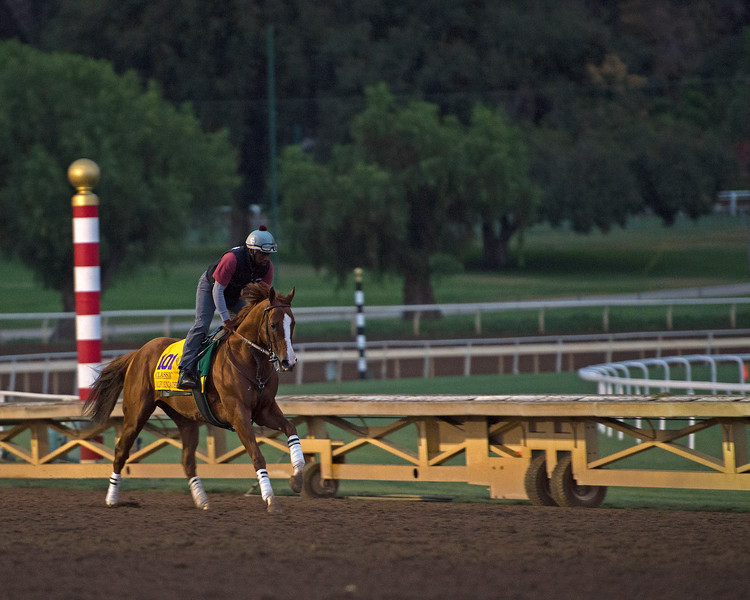 California Chrome<br /> Works at Santa Anita in preparation for 2016 Breeders' Cup on Nov. 1, 2016, in Arcadia, CA.