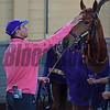 Madam Dancealot Schooling at Santa Anita.<br /> Works at Santa Anita in preparation for 2016 Breeders' Cup on Oct. 30, 2016, in Arcadia, CA.