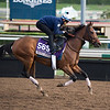 Wavell Avenue<br /> Works at Santa Anita in preparation for 2016 Breeders' Cup on Nov. 1, 2016, in Arcadia, CA.
