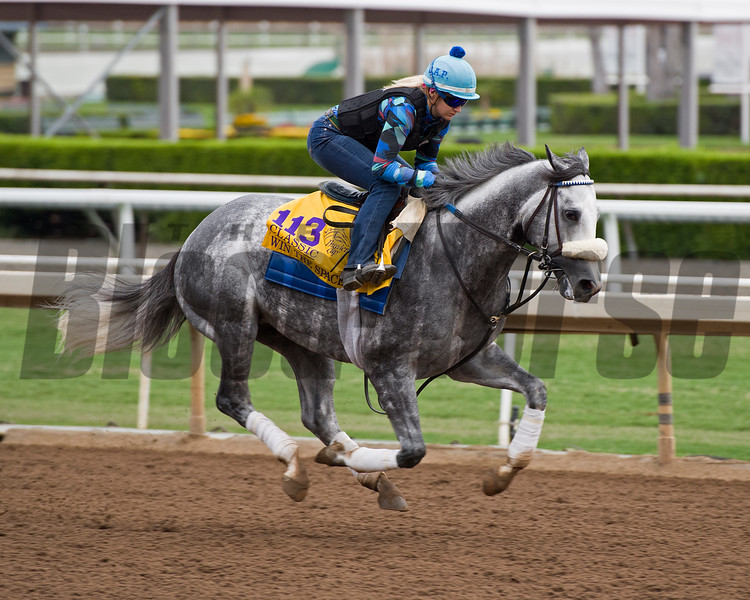 Win the Space<br /> Works at Santa Anita in preparation for 2016 Breeders' Cup on Oct. 30, 2016, in Arcadia, CA.