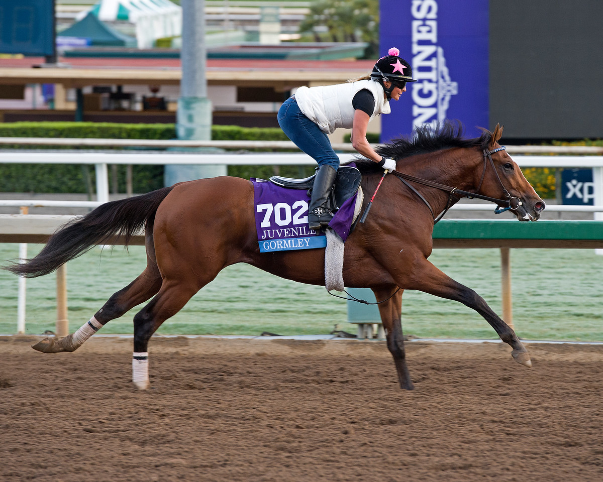 Gormley, Juvenile.<br /> Works at Santa Anita in preparation for 2016 Breeders' Cup on Oct. 29 2016, in Arcadia, CA.