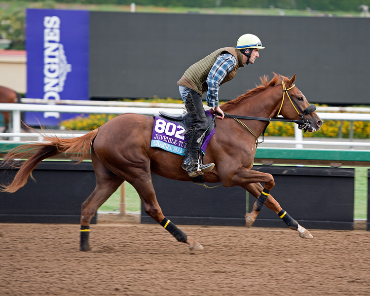 Channel Marker<br /> Works at Santa Anita in preparation for 2016 Breeders' Cup on Nov. 1, 2016, in Arcadia, CA.