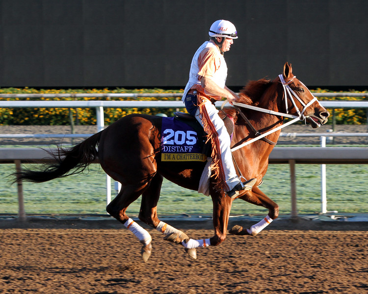 I'm a Chatterbox Breeders' Cup Distaff Chad B. Harmon