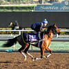Yellow Agate Breeders Cup Juvenile Fillies Chad B. Harmon