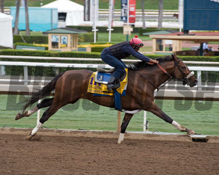 Shaman Ghost<br /> Works at Santa Anita in preparation for 2016 Breeders' Cup on Oct. 29 2016, in Arcadia, CA.