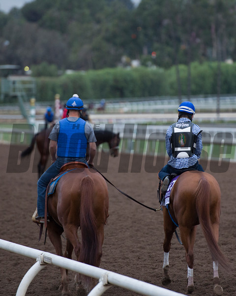 Gun Runner on track heading back to barn after work.<br /> Works at Santa Anita in preparation for 2016 Breeders' Cup on Oct. 30, 2016, in Arcadia, CA.