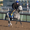 Frosted gallops at Santa Anita Nov. 2, 2016 in preparation for his appearance in the Breeders' Cup in Arcadia, California.  Photo by Skip Dickstein