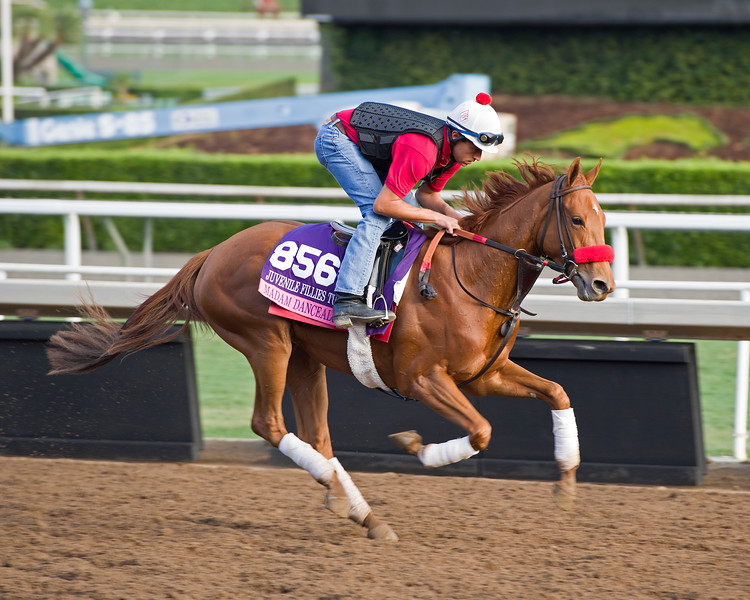 Madam Dancealot<br /> Works at Santa Anita in preparation for 2016 Breeders' Cup on Nov. 1, 2016, in Arcadia, CA.