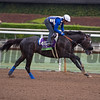 Midnight Storm<br /> Works at Santa Anita in preparation for 2016 Breeders' Cup on Oct. 31, 2016, in Arcadia, CA.