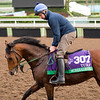 Mondialiste<br /> Works at Santa Anita in preparation for 2016 Breeders' Cup on Nov. 1, 2016, in Arcadia, CA.