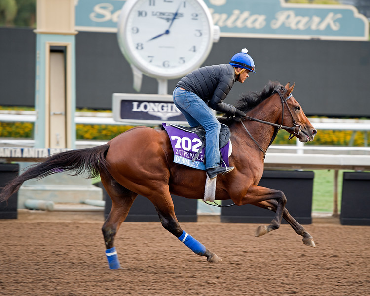 Gormley<br /> Works at Santa Anita in preparation for 2016 Breeders' Cup on Nov. 1, 2016, in Arcadia, CA.