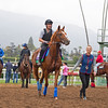 Ulysses and other European horses leave the turf course.<br /> Works at Santa Anita in preparation for 2016 Breeders' Cup on Nov. 1, 2016, in Arcadia, CA.