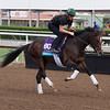 Good Samaritan<br /> Works at Santa Anita in preparation for 2016 Breeders' Cup on Nov. 1, 2016, in Arcadia, CA.