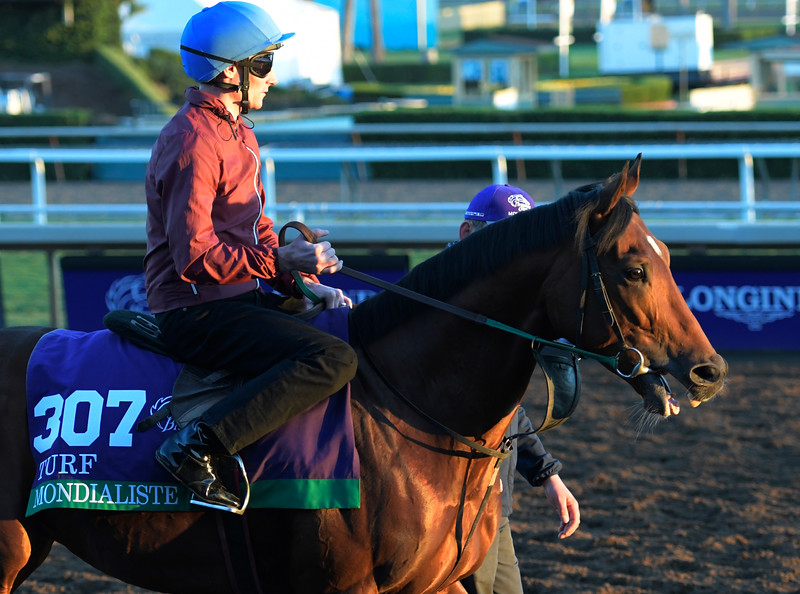 Mondialiste out for a gallop at Santa Anita Nov. 3, 2016 in preparation for her appearance in the Breeders' Cup in Arcadia, California.  Photo by Skip Dickstein