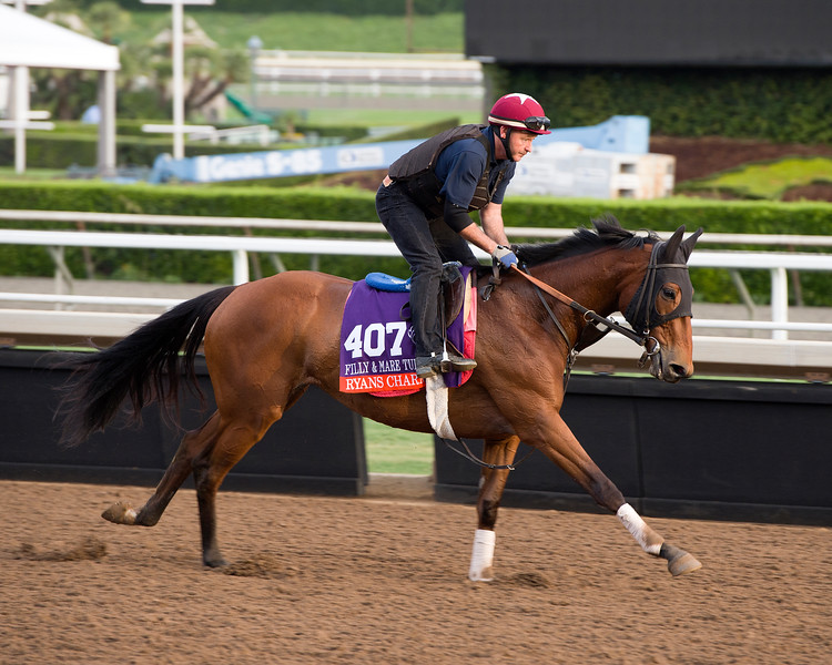 Ryans Charm<br /> Works at Santa Anita in preparation for 2016 Breeders' Cup on Nov. 1, 2016, in Arcadia, CA.