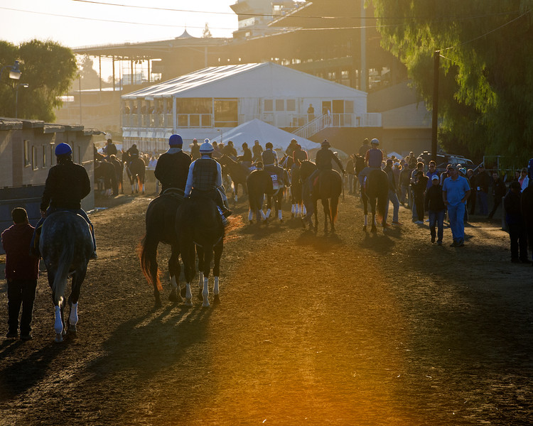 Morning scenes at Santa Anita in preparation for 2016 Breeders' Cup on Nov. 3, 2016, in Arcadia, CA.