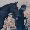 Miss Temple City is held by trainer Graham Motion after a gallop at Santa Anita Nov. 2, 2016 in preparation for her appearance in the Breeders' Cup in Arcadia, California.  Photo by Skip Dickstein