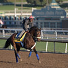 Enffinex out for a gallop at Santa Anita Nov. 3, 2016 in preparation for her appearance in the Breeders' Cup in Arcadia, California.  Photo by Skip Dickstein