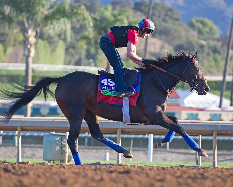 Miss Temple City<br /> Morning scenes at Santa Anita in preparation for 2016 Breeders' Cup on Nov. 3, 2016, in Arcadia, CA.