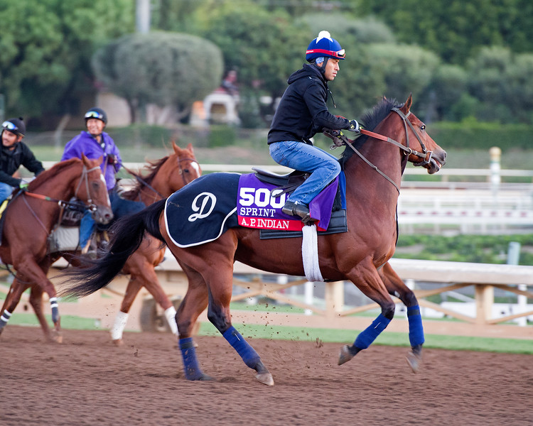 A.P. Indian<br /> Morning scenes at Santa Anita in preparation for 2016 Breeders' Cup on Nov. 3, 2016, in Arcadia, CA.