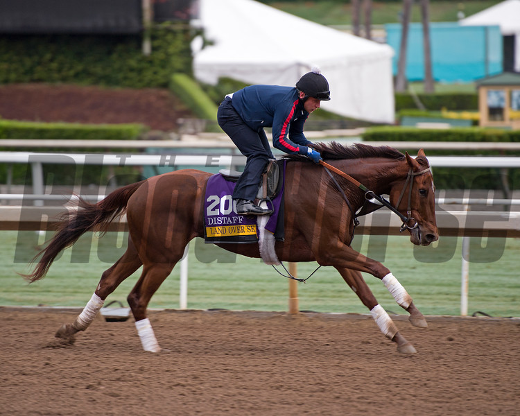 Land Over Sea<br /> Works at Santa Anita in preparation for 2016 Breeders' Cup on Oct. 31, 2016, in Arcadia, CA.
