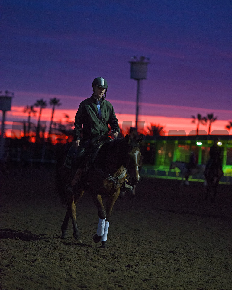 Sunrise<br /> Works at Santa Anita in preparation for 2016 Breeders' Cup on Oct. 30, 2016, in Arcadia, CA.