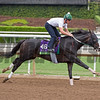 Tourist<br /> Works at Santa Anita in preparation for 2016 Breeders' Cup on Oct. 30, 2016, in Arcadia, CA.
