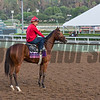 Sweeping Paddy, Juvenile Fillies Turf<br /> Works at Santa Anita in preparation for 2016 Breeders' Cup on Oct. 29 2016, in Arcadia, CA.