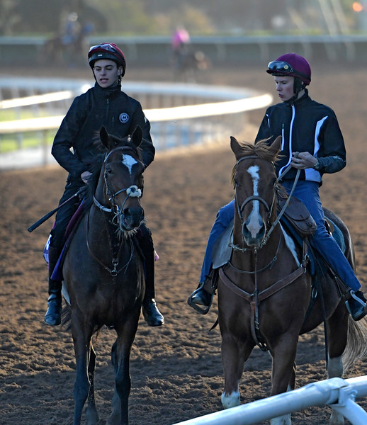 Intricately is lead out for a gallop by Joseph O'Brien at Santa Anita Nov. 3, 2016 in preparation for her appearance in the Breeders' Cup in Arcadia, California.  Photo by Skip Dickstein