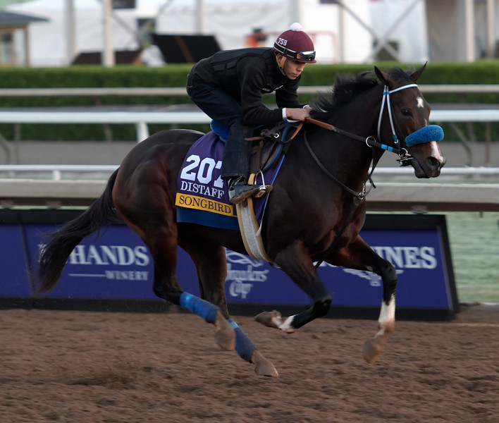 Songbird is out for a gallop at Santa Anita Nov. 2, 2016 in preparation for her appearance in the Breeders' Cup in Arcadia, California.  Photo by Skip Dickstein