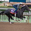 Avenge<br /> Works at Santa Anita in preparation for 2016 Breeders' Cup on Oct. 31, 2016, in Arcadia, CA.