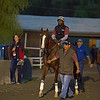 California Chrome with Alan Sherman<br /> Works at Santa Anita in preparation for 2016 Breeders' Cup on Nov. 1, 2016, in Arcadia, CA.