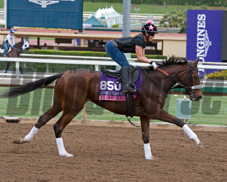 Coasted, Juvenile Fillies Turf<br /> Works at Santa Anita in preparation for 2016 Breeders' Cup on Oct. 29 2016, in Arcadia, CA.