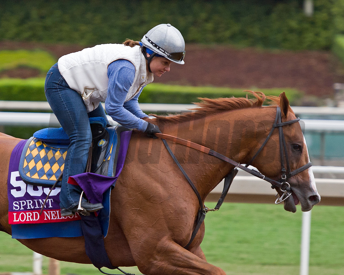 Lord Nelson<br /> Scenes at Santa Anita in preparation for 2016 Breeders' Cup on Oct. 30, 2016, in Arcadia, CA.