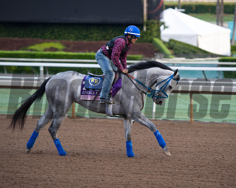 Colorful Charades<br /> Works at Santa Anita in preparation for 2016 Breeders' Cup on Oct. 31, 2016, in Arcadia, CA.