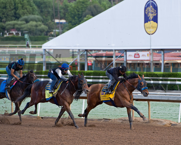 Hoppertunity works in company with Raffi, Classic.<br /> Works at Santa Anita in preparation for 2016 Breeders' Cup on Oct. 29 2016, in Arcadia, CA.