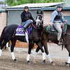 Tom's Ready<br /> Works at Santa Anita in preparation for 2016 Breeders' Cup on Nov. 1, 2016, in Arcadia, CA.