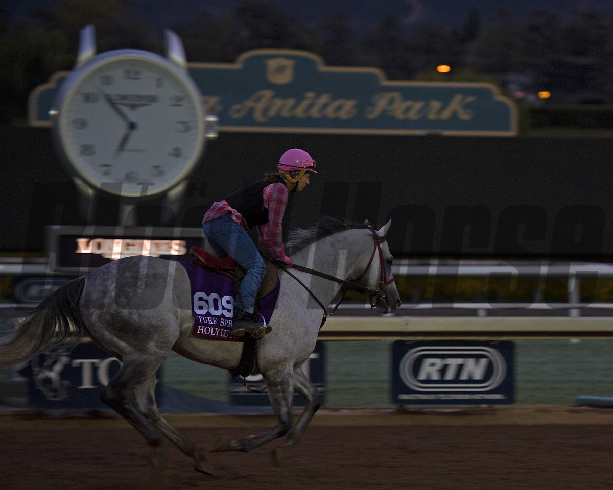 Holy Lute, Turf Sprint<br /> Works at Santa Anita in preparation for 2016 Breeders' Cup on Oct. 29 2016, in Arcadia, CA.