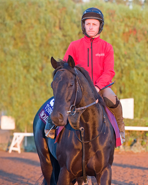 Suedois<br /> Morning scenes at Santa Anita in preparation for 2016 Breeders' Cup on Nov. 3, 2016, in Arcadia, CA.