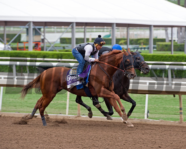 Dortmund<br /> Works at Santa Anita in preparation for 2016 Breeders' Cup on Oct. 30, 2016, in Arcadia, CA.