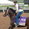 Union Strike<br /> Works at Santa Anita in preparation for 2016 Breeders' Cup on Nov. 1, 2016, in Arcadia, CA.