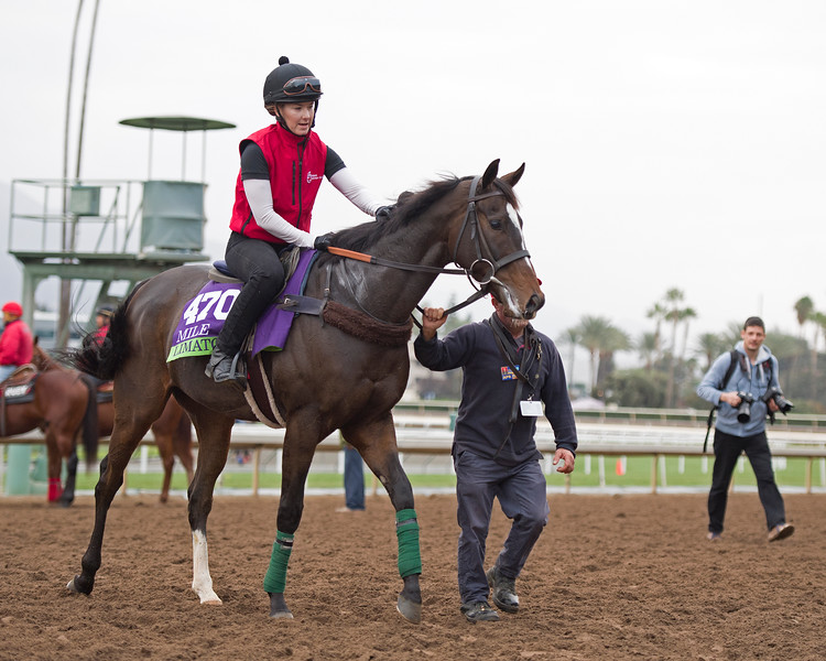 Limato<br /> Works at Santa Anita in preparation for 2016 Breeders' Cup on Nov. 1, 2016, in Arcadia, CA.