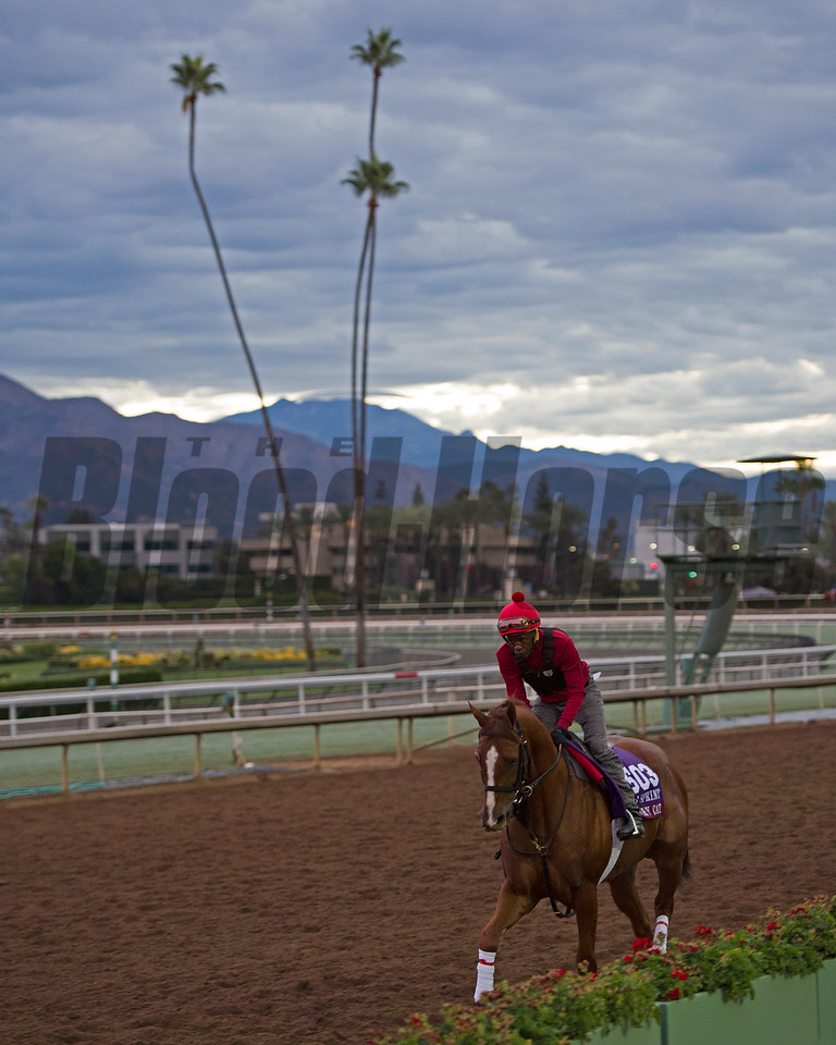 Calgary Cat, Turf Sprint<br /> Works at Santa Anita in preparation for 2016 Breeders' Cup on Oct. 29 2016, in Arcadia, CA.