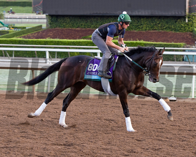 Good Samaritan, Juvenile<br /> Works at Santa Anita in preparation for 2016 Breeders' Cup on Oct. 29 2016, in Arcadia, CA.